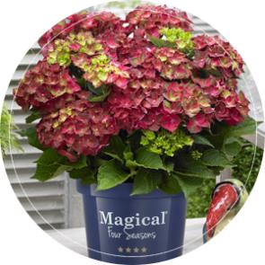 bloemen kweker huissen