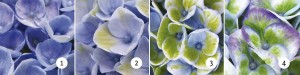 verkleuring_magical_revolution_blauw